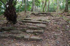 Peldaños tragados por la vegetación en Venta de Cruces, selva de Panamá