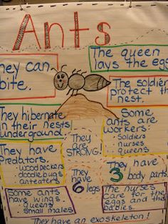 Talk about the different types/jobs of all the ants in the colony