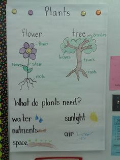 Today In First Grade: Plants and a Sale!