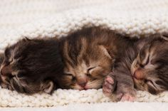 Spring is already here in some parts of the country, and knocking on the door of the rest. To those of us in the sheltering world, that doesn't mean spring flowers or spring showers... it means kitten season.  Maddie's Institute® is here to help with this list of kitten season resources!