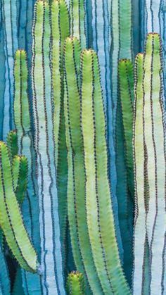 nature is awesome Cactus Painting, Cactus Art, Plant Painting, Painting Canvas, Cacti And Succulents, Cactus Plants, Desert Art, Art Abstrait, Art Plastique