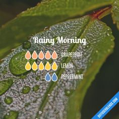Rainy Morning - Essential Oil Diffuser Blend