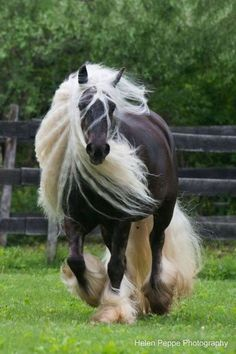 Horse Beauty Travel Adventure Vacation Holiday Travelphotography Tour Tourism Flight Easyjet Trips Over In 2020 Horses Equine Photographer Animals Beautiful