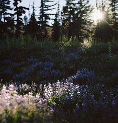 ~☼ ❊✧ ~☼ *~*~Field of Dreams~*~* ☪~ ✧❊ ☾~
