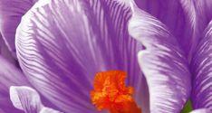 Hardføre vårfavoritter som også hjelper pollinatorer