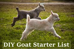 DIY Goat Starter List - everything you need to get started to be successful with goats... #goats #homesteading