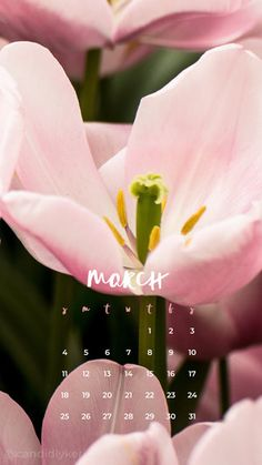 2018_March2M.jpg
