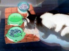Kittys food time