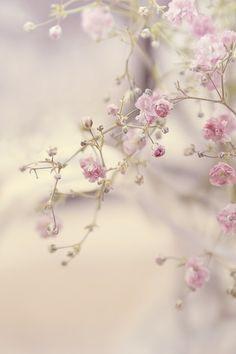 Pink blossoms make me smile