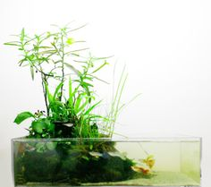 Wabi-kusa are Japanese aqua-scapes. These look so cool, I'm really excited now!