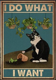 Animals And Pets, Funny Animals, Cute Animals, Crazy Cat Lady, Crazy Cats, Art And Illustration, Illustrations, Cat Posters, Movie Posters