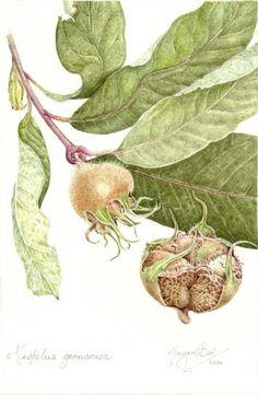 Margaret Best | American Society of Botanical Artists