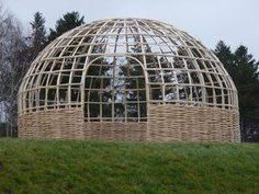 Shop Here To Buy Living Willow Kits For Fencing And