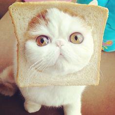 Snoopybabe, the Cutest Sad Cat Ever