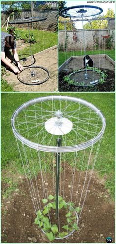 DIY Bike Wheel Trellis Instruction - DIY Ways to Recycle Bike Rims DIY Ways to Recycle Bike Rims Ideas & Instructions: Re-purpose Bike Wheels and Rims into Home and Garden Decoration, Wreath, Garden Art, Trellis, Chandelier Diy Trellis, Garden Trellis, Trellis Ideas, Diy Garden Projects, Garden Tools, Garden Junk, Garden Sheds, Organic Gardening, Gardening Tips