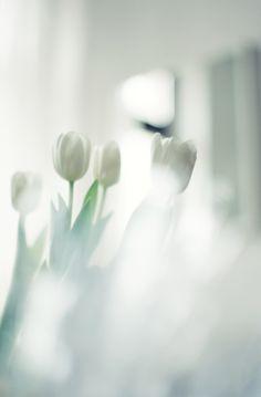 white tulips | Frühlingsblumen . spring flowers . fleurs printemps | @ sand love | //repinned by www.boksteen.de