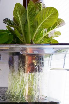Hanging Hydroponics Indoor Vertical Gardening Engineered for a Hungry World