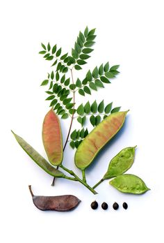 coffeetree | STILL (mary jo hoffman)