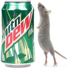 14 Reasons to Stop Drinking Mountain Dew | Get Better Wellness