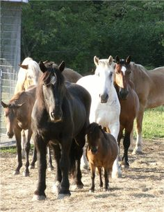 The Blue Star Equiculture is a working horse rescue and sanctuary , we help working horses live out their days in comfort and dignity and help humans connect with , care for and be better partners to horses and Mother Earth.