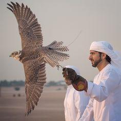 9/17/14 Preparing/training for 2014 falconry season PHOTO:aj6544