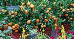 grow fruit trees anywhere