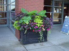 Part sun to shade pot! Elephant ear, coleus, persian shield plant, vina vine, impatiens. Lovely!