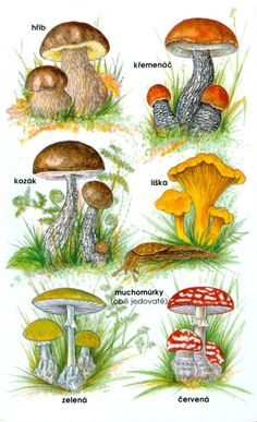 Animal Activities, Autumn Activities, Activities For Kids, Preschool Education, Teaching Kids, Kids Learning, Mushroom Decor, Mushroom Art, Fall Crafts