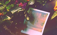 Love Fi Photography, Home of the low fi,hi fi, gif fi:  - Photosynthesis.  Love-fi.com