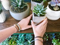 Cute pots + tiny succulents x @deannadunn