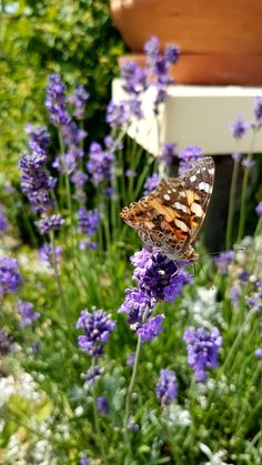 Enjoy your short life, butterfly🦋 Samsung Photos, Flower Landscape, Perfect Day, Bratislava, Summer Days, Beautiful Places, Butterfly, In This Moment, Nature