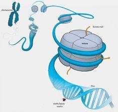 Epigenetics—Inheriting More Than Genes    Human Wonders