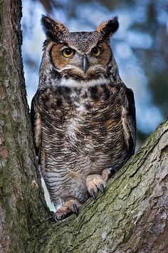 """Sold - Dale Kincaid sold a 6.63"""" x 10.00"""" print of Great Horned Owl to a buyer from Commerce Twp, MI."""