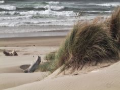 Shaped by wind and waves - Dunes , Florence Oregon by janusz l, via Flickr