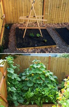 Growing Summer Squash on a Trellis