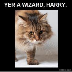 """Hagrid Cat Looks So Serious """"Sirius"""""""