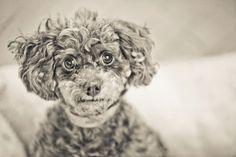 Ellen-National Mill Dog Rescue