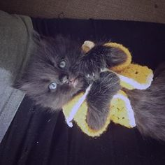 Wearing my yellow jacket today Black Kittens, Blue Eyes, My Girl, Cold, Sweater, Photo And Video, Jacket, Yellow, Animals