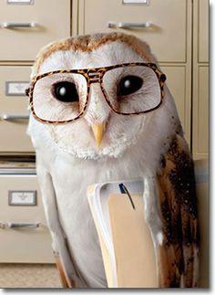 Office Owl Funny Birthday Card - Greeting Card by Avanti Press picclick.com