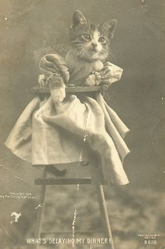 Victorian era photographs of kittens were quite popular, especially if the kittens were dressed as people