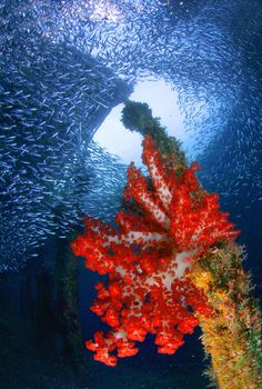 Fond #subaquatique à Raja Ampat en #Indonesie