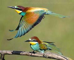 1517cc6b7222a38029bff3a4a67c2e4e--birds.jpg