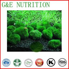 100g top quality Chlorella Powder  Extract with  favorable price and free shippment