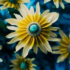 Yellow Blue and White Floral Photography Postcard - floral style flower flowers stylish diy personalize Twin Souls, Floral Photography, Photography Gifts, Spring Is Coming, Do Love, Guys And Girls, Yellow Flowers, Floral Flowers, Photo Editor