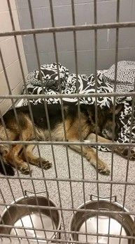 Pitiful dog returned to Ohio shelter because he didn't like adopters cat