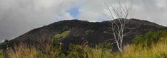 Cairns to Cooktown Road Trip: Bloomfield Track or Inland Road?