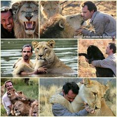 I want to be that guy! Look at how close he is with the lions! ❤️