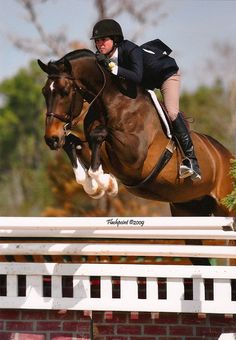 "Hunter. I love the Way Hunters jump. They have that beautiful ""pop"" that sends them up and over effortlessly."