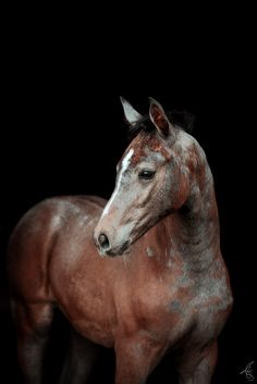Schlicht und elegant - Black Background Fotos All Pictures, Black Backgrounds, Handsome, Horses, Elegant, Animals, Beautiful, Animals And Pets, Baby Horses