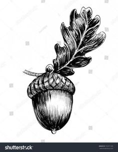Acorn and oak leaf. Ink black and white drawing , Acorn Drawing, Leaf Drawing, Painting & Drawing, Blue Drawings, Pencil Drawings, Art Drawings, Realistic Flower Drawing, Drawing Flowers, Ink Illustrations